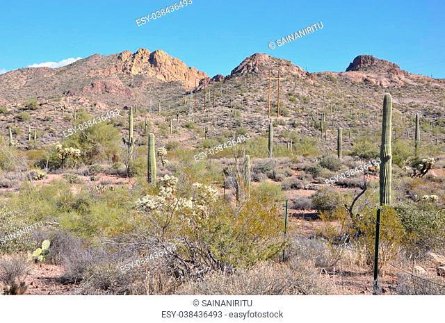 Cactus in Arizona, USA