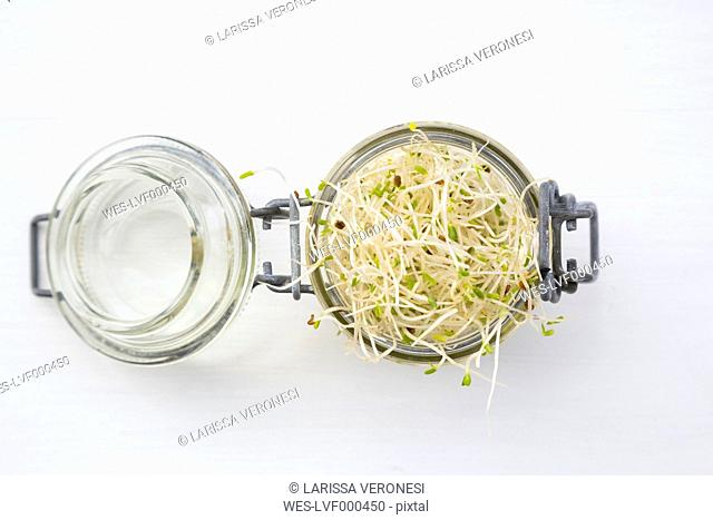 Preserving jar with alfalfa sprouts (Medicago sativa) on white ground