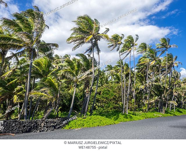 Punaluu Beach has black sand made of basalt and created by lava flowing into the ocean which explodes as it reaches the ocean and cools