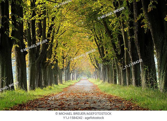 Alley in Autumn, Hesse, Germany, Europe