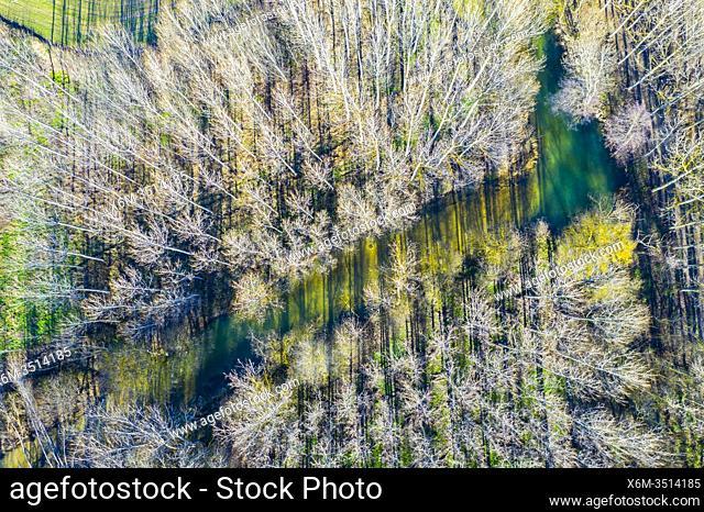 Ega river and poplar grove. Aerial view. Ancin area. Navarre, Spain, Europe