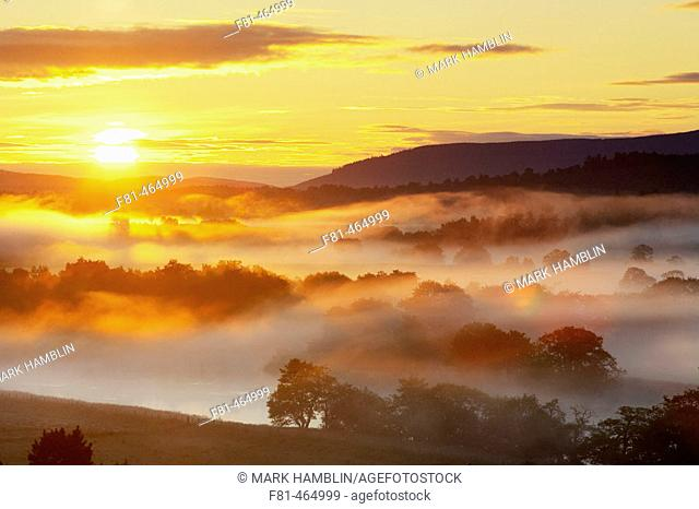 Low lying mist over River Spey & scattered woodland at sunrise. Strathspey, Scotland. UK. July 2005