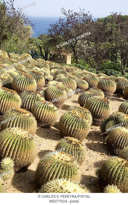 Botanical garden. Costa Brava, Girona province, Catalonia, Spain