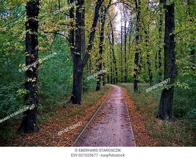 Elbe-Radweg im Park Sieglitzer Berg bei Vockerode