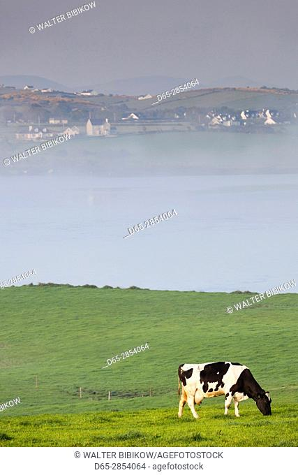 Ireland, County Donegal, Fanad Peninsula, Carrigart, cow and fog