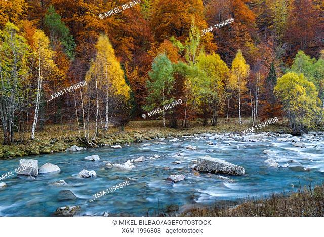 Arazas river and deciduous forest in autumn