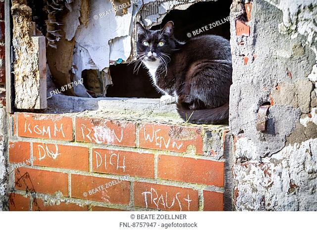 Cat in windowsill of a ramshackle house