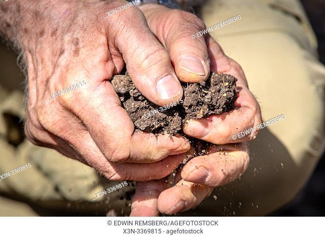 Hands break up chunks of soil, Debre Berhan, Ethiopia