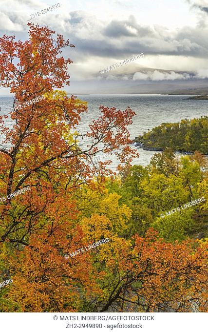 View from Björkliden over Abisko with lake Torneträsk in autumn season, clouds hanging over the mountains, Abisko, Kiruna county, Swedish Lapland, Sweden