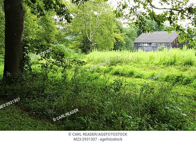 An old barn appears hidden in the overgrowth, Pennsylvania, USA