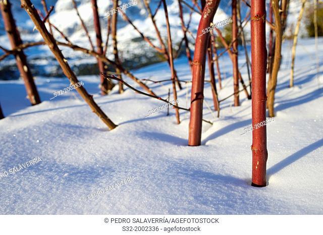closeup of a bush in Tena Valley, Pyrenees, Huesca, Aragon, Spain