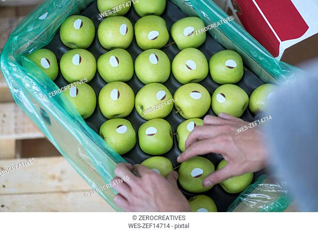 Close-up of woman's hands and green apples in cardboard box
