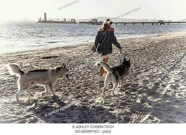 Young woman walking pet dogs on beach