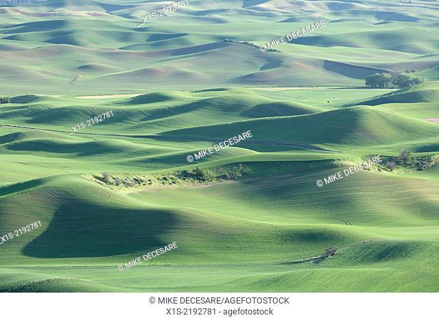 Steptoe Butte overlook of farm land landscapes
