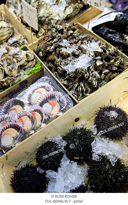 Market stall with shell fish and sea urchins, Mallorca, Spain