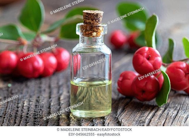 A bottle of essential oil with wintergreen leaves and berries