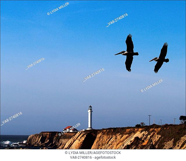 Pelicans fly past Battery Point Lighthouse in Crescent City, California, USA