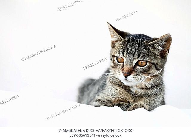 Little cat resting