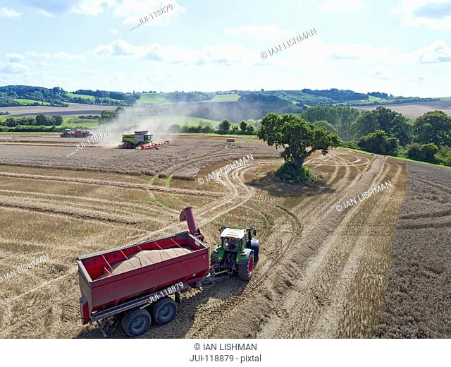 Aerial view of summer country farming landscape and wheat field being harvested by combine harvester with trailer and grain in foreground