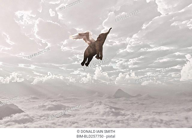 Elephant flying in clouds