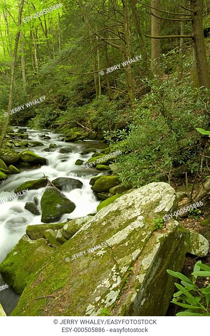 Roaring Fork, Great Smoky Mtns National Park