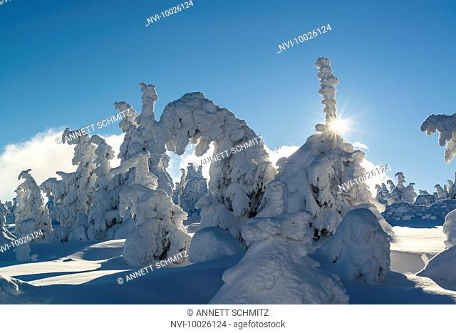 Wintertime landscape at Brocken, Harz National Park, Saxony Anhalt, Germany
