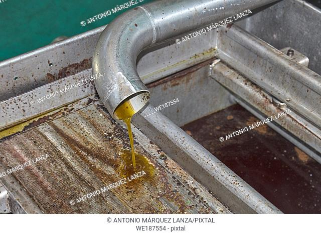 Spanish olive oil process factory