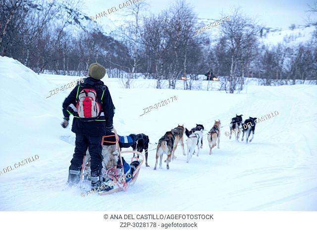 Dog sledding in Kirkenes, Northern Norway