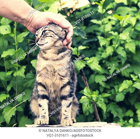 human hand stroking a street tabby against a background of green bushes
