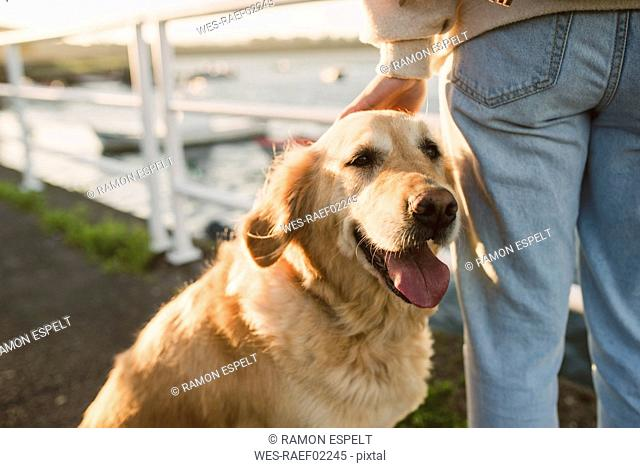 Close-up of woman with her golden retriever dog at the waterfront