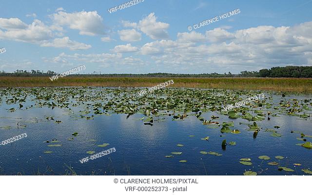 Florida scrub vegetation blows in the wind around a vegetated pond in Hopkins Prairie in Ocala National Forest, Florida