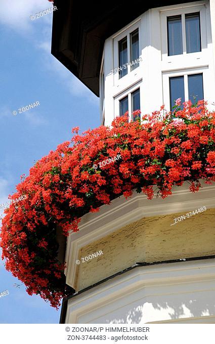 In Balkonkästen am Haus