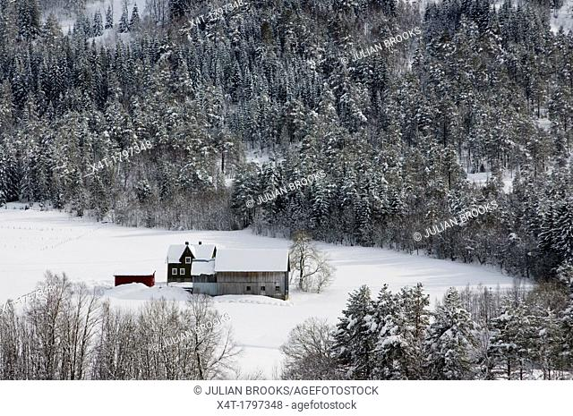 a mountain farm in the snow, Norway