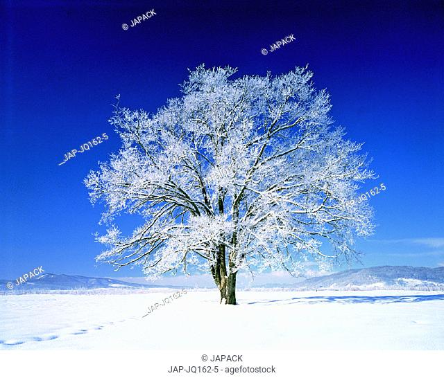 Snow covered field and tree