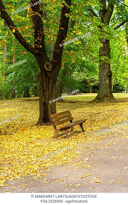 Chestnut tree and an empty bench with fallen autumn leaves on the ground in Japanese Park in Wroclaw, Poland
