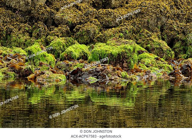 Reflections in Burnaby Narrows at low tide, Haida Gwaii (Queen Charlotte Islands) Gwaii Haanas NP, British Columbia, Canada