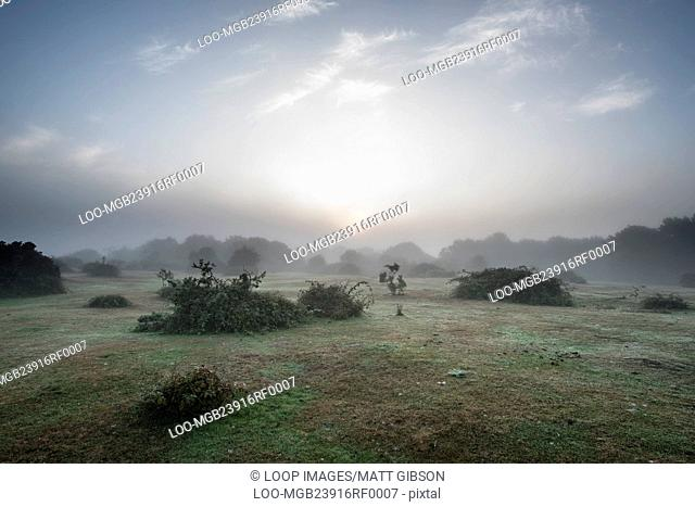 Stunning sunrise landscape in misty New Forest countryside