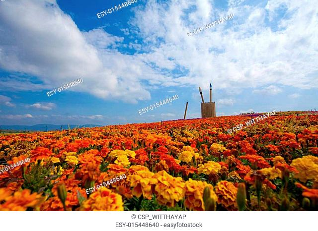 field of red flower