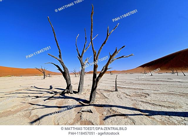 Dead remains of an acacia tree in the Dead Vlei cast shadows on the ground, taken on 01.03.2019. The Dead Vlei is a dry, surrounded by tall dune clay pan with...