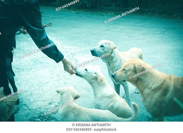 Woman gives homeless dog food. Woman hand feeding the dog