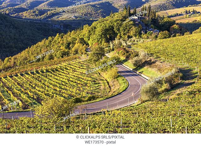 Greve in Chianti, Florence province, Tuscany, Italy. Farmhouse and vineyards at sunrise