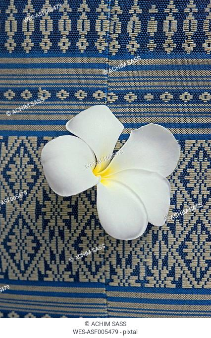 Thailand, Koh Phangan, Frangipani blossom on traditional fabric