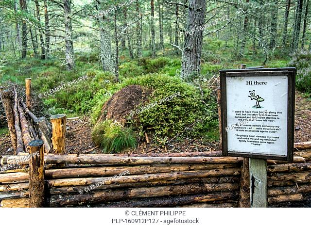 Warning sign near fenced anthill of red wood ants / horse ant (Formica rufa) made of conifer needles in Abernethy Forest, Scotland