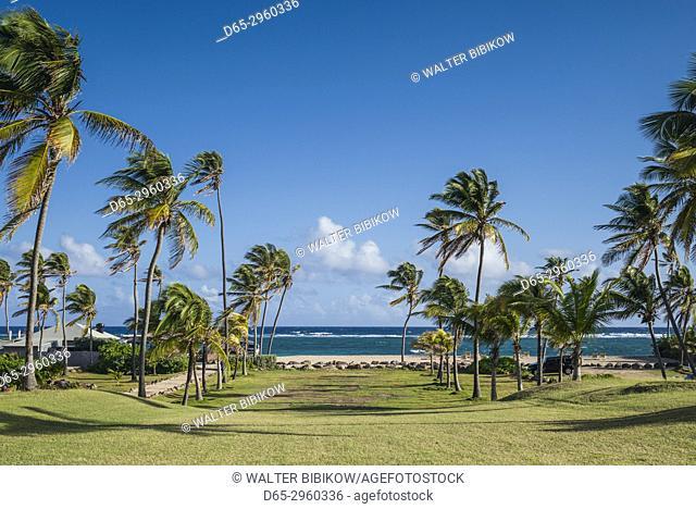 St. Kitts and Nevis, Nevis, Nisbet Beach, beach palm trees