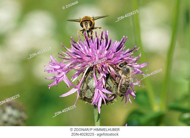 Blüte mit Bienen
