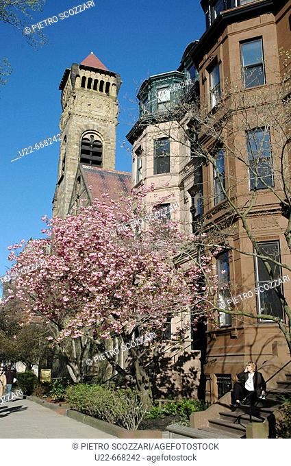 Boston, blossoming trees along Commonwealth Avenue