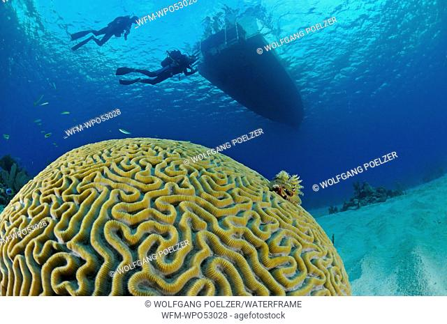 Brain Coral and Scuba diver, Diploria strigosa, Maria la Gorda, Caribbean Sea, Cuba