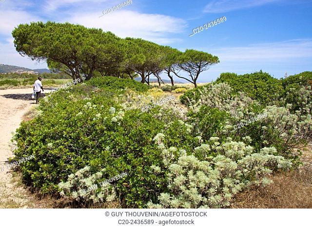 Sandy path to the beach, and sea, scrub plants and pine trees in the background, Costa degli Oleandri, near Ottiolu harbour, Sardinia, Italy