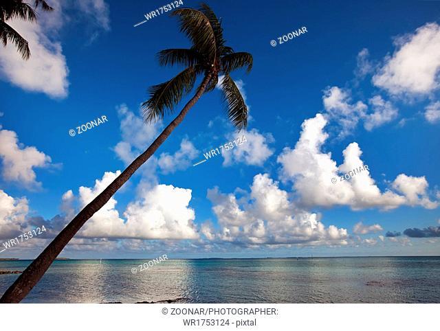 Palm tree bent above waters of ocean
