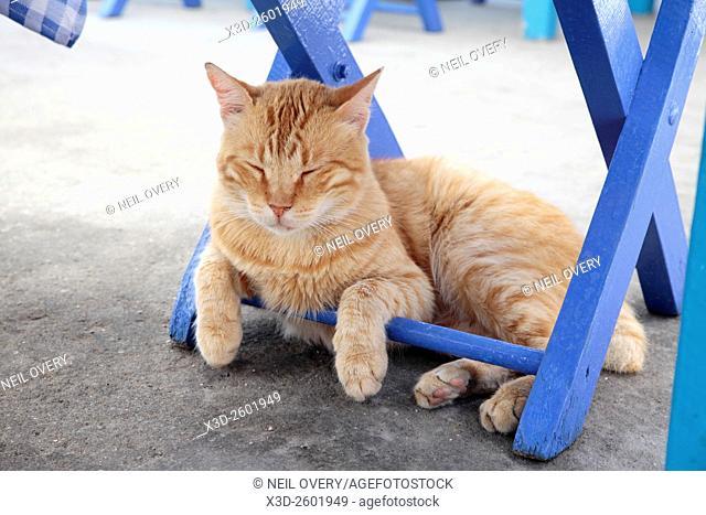 Cat Sleeping under blue chair, Kastellorizo, Greece
